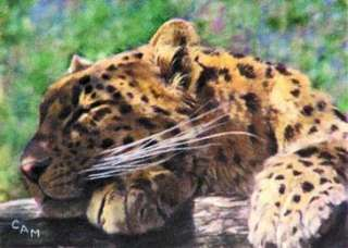 ACEO LTD ED PRINT FROM ORIGINAL ART LEOPARD CAT MASON